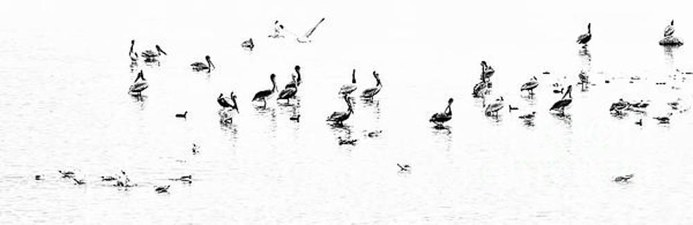 Bird Party by Norma Warden
