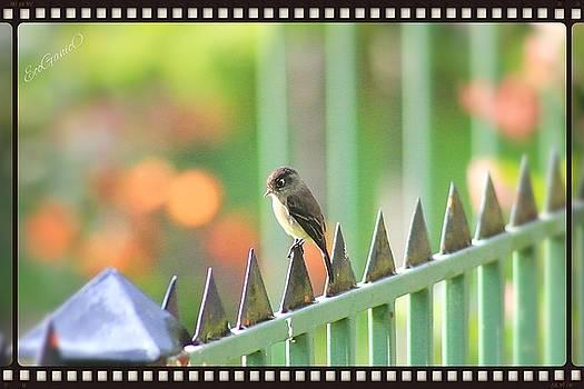Bird by Pascal Schreier