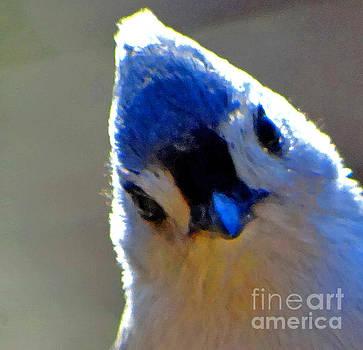 Bird Photography Series Nmb 5 by Elizabeth Coats