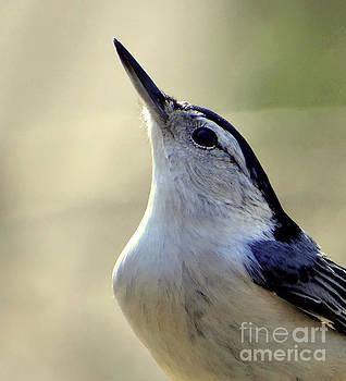 Bird Photography Series Nmb 6 by Elizabeth Coats