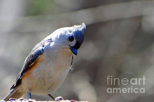 Bird Photography Series Nmb 7 by Elizabeth Coats