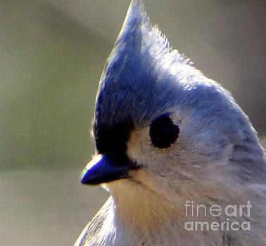 Bird Photography Series Nmr 3 by Elizabeth Coats