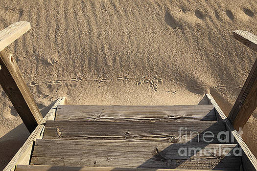 Bird prints in the sand by Bryan Attewell