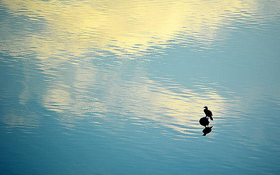Bird Reflection by AJ Schibig