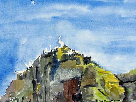 Bird Rock by Kathleen Barnes
