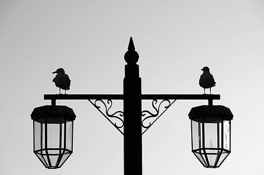 Bird Silhouette by Chris Day