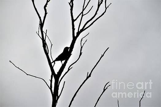 Bird Silhouette by Tracey Lee Cassin