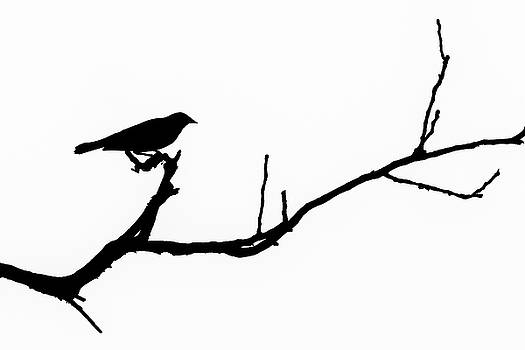 Bird Silhouettes 6 by Nathan Larson