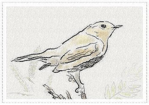 Bird Sketch 10 by Shishir Thadani