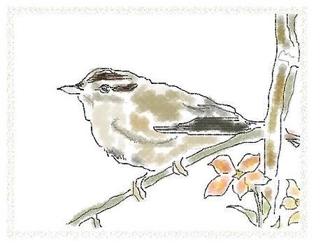 Bird Sketch 11 by Shishir Thadani