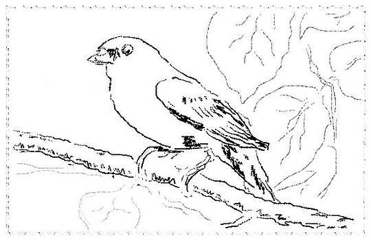 Bird Sketch 2 by Shishir Thadani