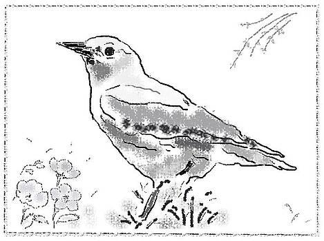 Bird Sketch 3 by Shishir Thadani