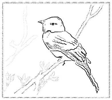 Bird sketch 4 by Shishir Thadani