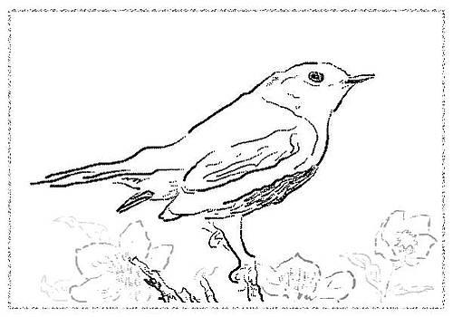 Bird sketch 5 by Shishir Thadani