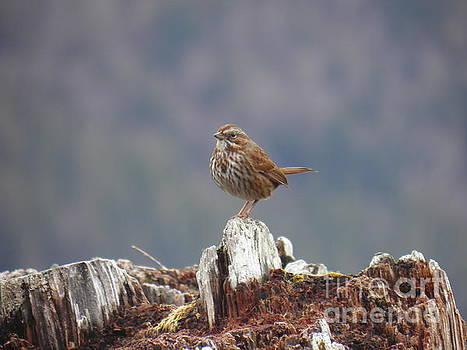 Bird song by Ida Eriksen