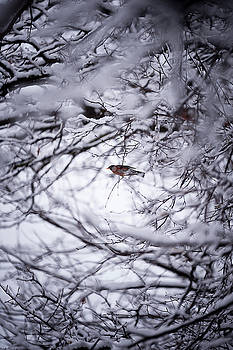 Bird through the branches by Frederico Borges