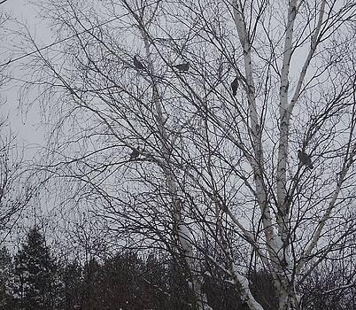 Bird Tree by Jeremy Gibson