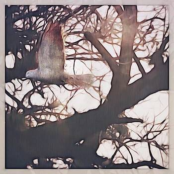 #bird #trees #flight #iphoneography by Judy Green