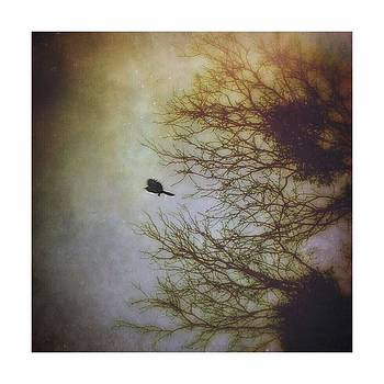 #bird #trees #iphoneography #flight by Judy Green