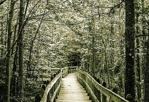 Bird Walk by Amy Layton