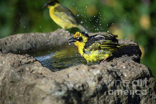 Bird wash by Morris Keyonzo