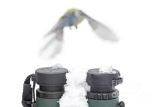 Simon Bratt Photography LRPS - Bird watching concept in winter