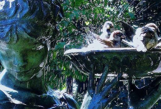 Birdbath Frenzy by Maria Scarfone