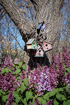 Birdhouses and Lilacs by Mary Lee Dereske