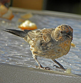Elizabeth Hoskinson - Birdie Friend