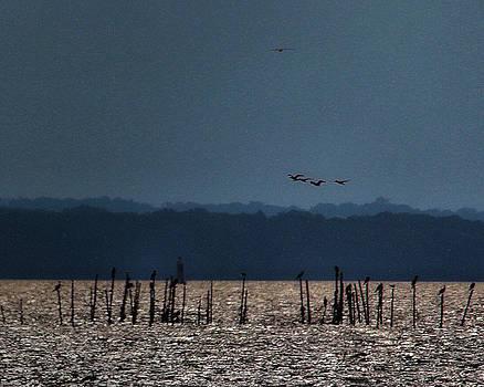 Birdies by Robert McCubbin