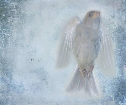Birdness by Jim Wright