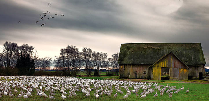 Birds and Barn by Rick Lawler
