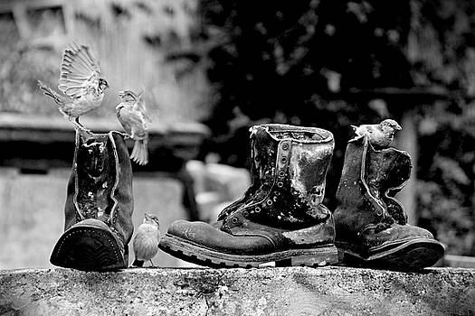 Birds and Boots by Steven Coppenbarger