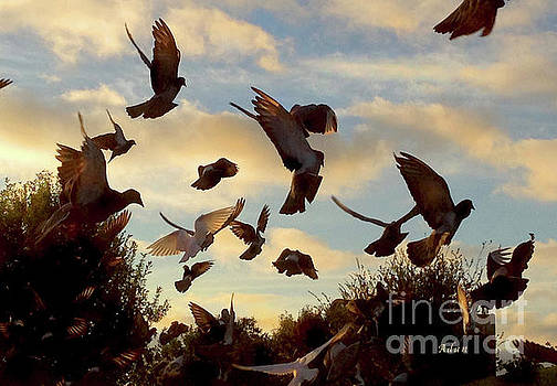Felipe Adan Lerma - Birds and Fun at Butler Park Austin - Birds 1