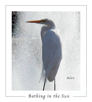 Felipe Adan Lerma - Birds and Fun at Butler Park Austin - Birds 2 Macro Poster