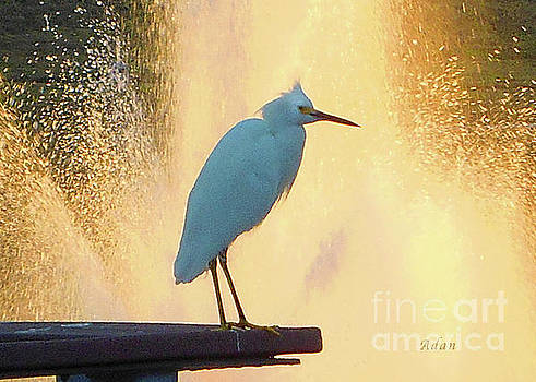 Felipe Adan Lerma - Birds and Fun at Butler Park Austin - Birds 3 Detail Macro