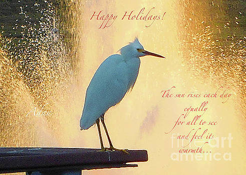 Felipe Adan Lerma - Birds And Fun At Butler Park Austin - Birds 3 Detail Macro Poster - Happy Holidays