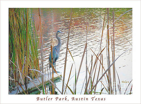 Felipe Adan Lerma - Birds and Fun at Butler Park Austin - Birds 4 Poster Greeting Card