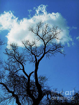 Felipe Adan Lerma - Birds and Fun at Butler Park Austin Clouds and Trees Three