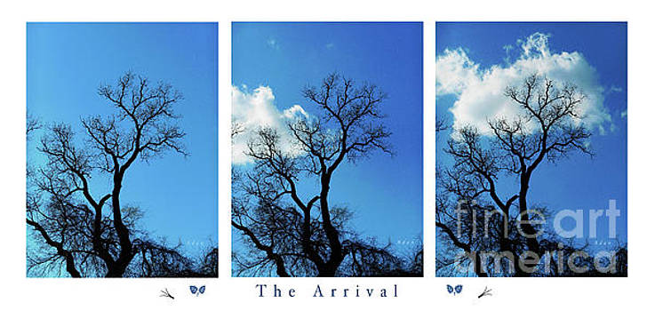 Felipe Adan Lerma - Birds and Fun at Butler Park Austin Clouds and Trees Triptych - The Arrival