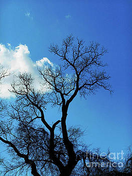 Felipe Adan Lerma - Birds and Fun at Butler Park Austin Clouds and Trees Two
