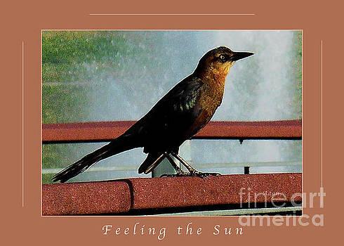 Felipe Adan Lerma - Birds and Fun at Butler Park Austin Five Macro Greeting Card Poster