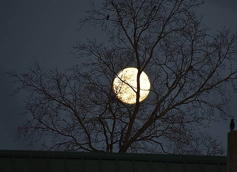 Birds and Moon and Tree by Muri McCage