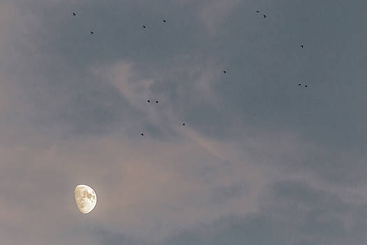 Birds and moon by Massimo Discepoli