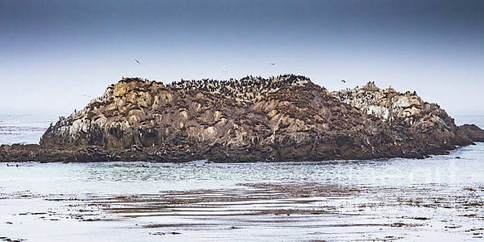 Lisa Lemmons-Powers - Birds and Camouflaged Sea Lions