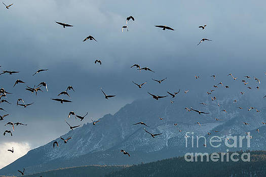 Steve Krull - Birds and Storm Clouds on Pikes Peak