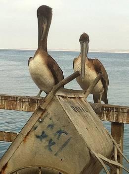 Birds at Sea by Angela Holmes
