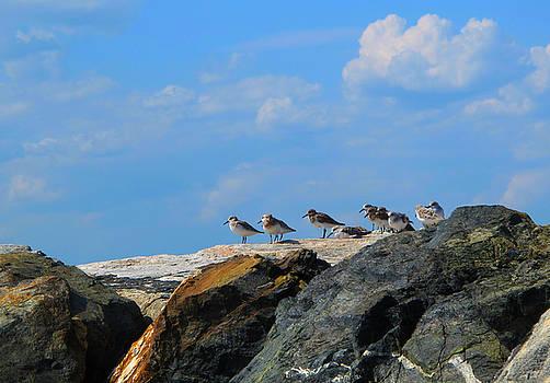 Birds at Seabrook Beach by Lynn Harrison