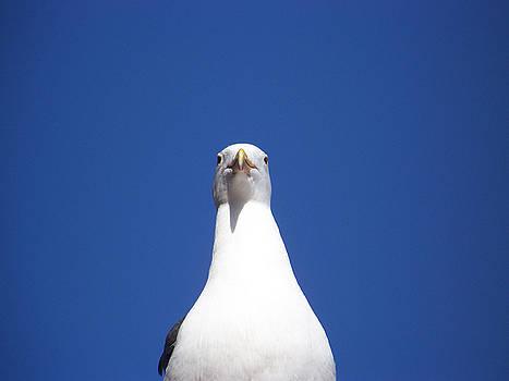 Birds Eye View by Maggie Cruser