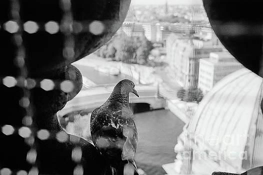 Dean Harte - Bird